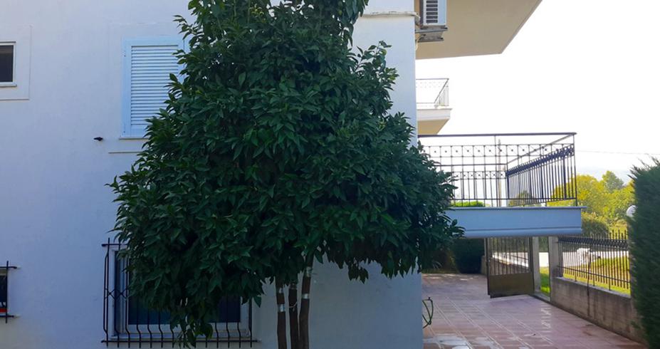 vila chrisanthi stavros grcka leto letovanje 10