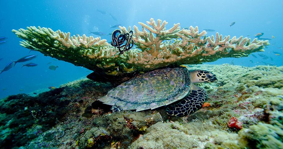 maldivi putovanje korali